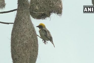 Gregorious Baya Weavers enhancing the beauty of Kathmandu with their presence.Read to know more: